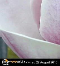 19_172.jpg