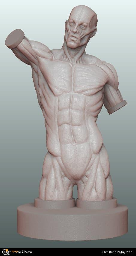 anatomia_711.jpg