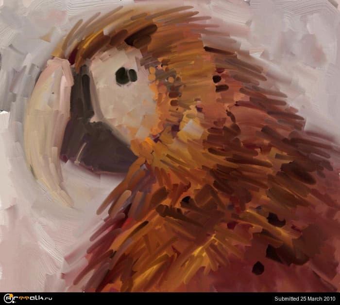 macaw_06_210.jpg