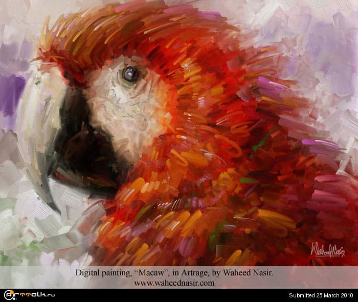 macaw_19_197.jpg