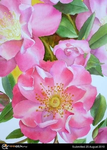 rose23_166.jpg