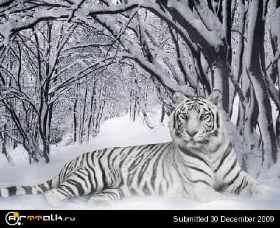 tiger1_main_954.jpg
