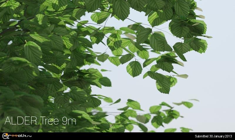 tree07_alder_close_up_144.jpg