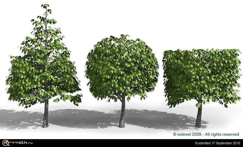 tree_04_207.jpg