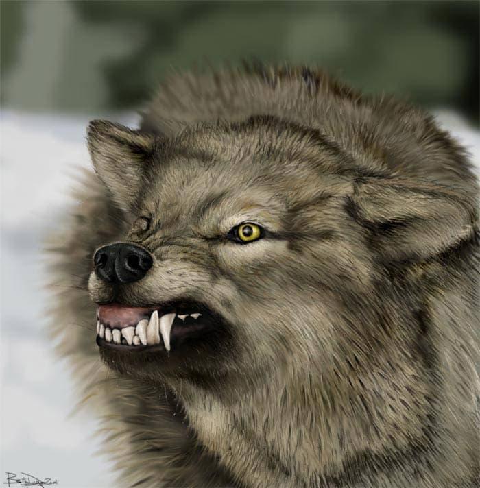wolf.jpg.451b5de92032049f96947272c88907ef.jpg