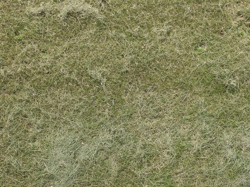 Grass0015_1_S.jpg.5465f968e97949a50bef32aae73c3e52.jpg