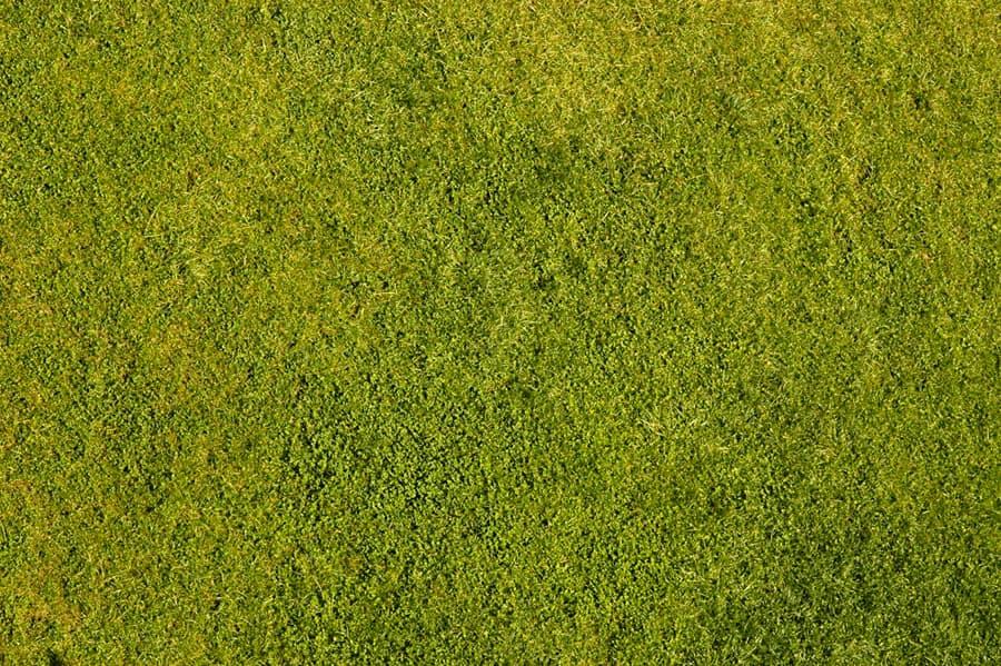 Grass0053_1_S.jpg.f7736088374ffedb2a59c73a5435dd40.jpg