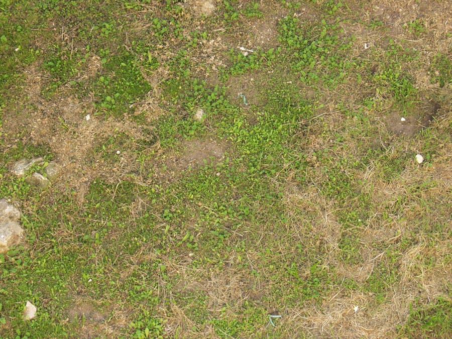 Grass0082_S.jpg.cae5847547e023a47e42f698067a8817.jpg