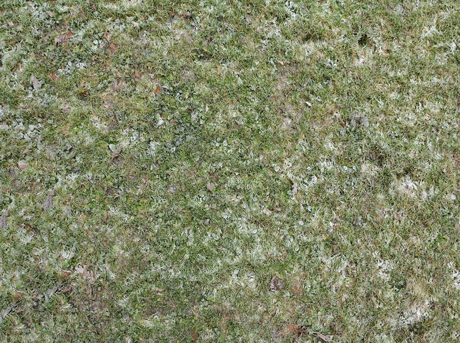 Grass0084_1_S.jpg.0d129e1ccb10c1ece588141adf72f334.jpg
