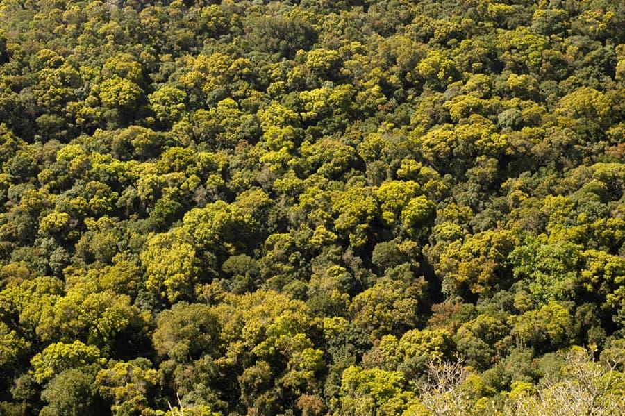 NatureForests0009_S.jpg.06d08d99c0e4435163c7a302d3a6178b.jpg