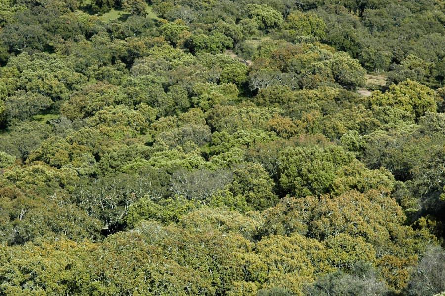 NatureForests0034_1_S.jpg.13c51c4911fd3f8d0b3c1b40547c8736.jpg