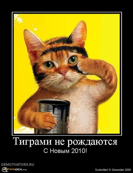 790129_tigrami-ne-rozhdayutsya.jpg.4ab168a455f735b2c5f144799f1b26eb.jpg