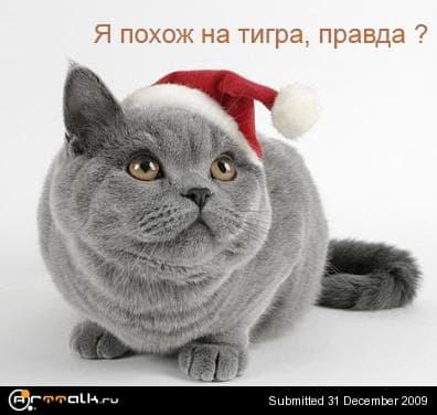 tiger-cat.jpg.dda61b5e8ff3f6c2f63b24d8f699be6a.jpg