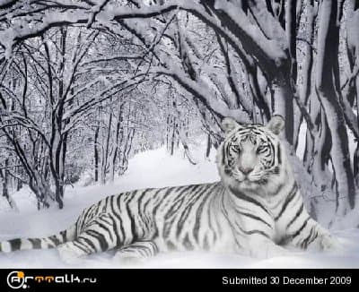 tiger1_main.jpg.bede7f664d2fc3c1dc30ab8d16360132.jpg