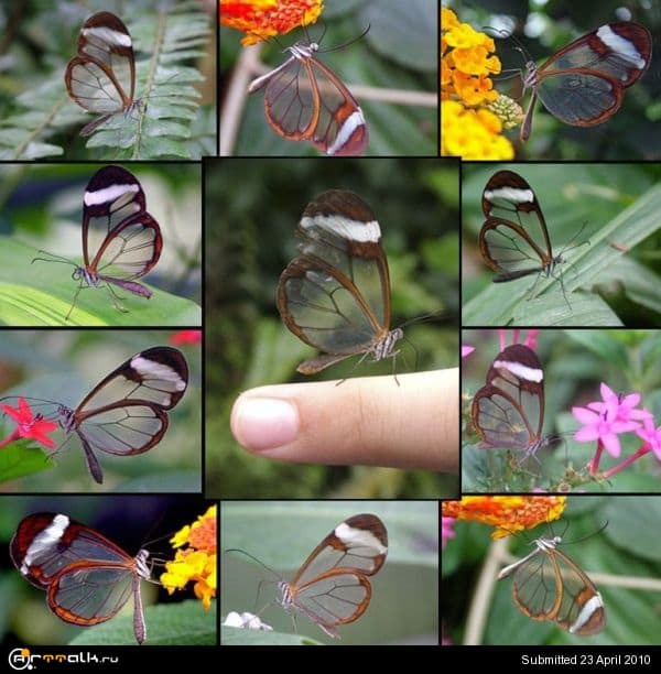butterfly-001.jpg.cbc9be68cf53fd9b48adf56d2ac5af83.jpg