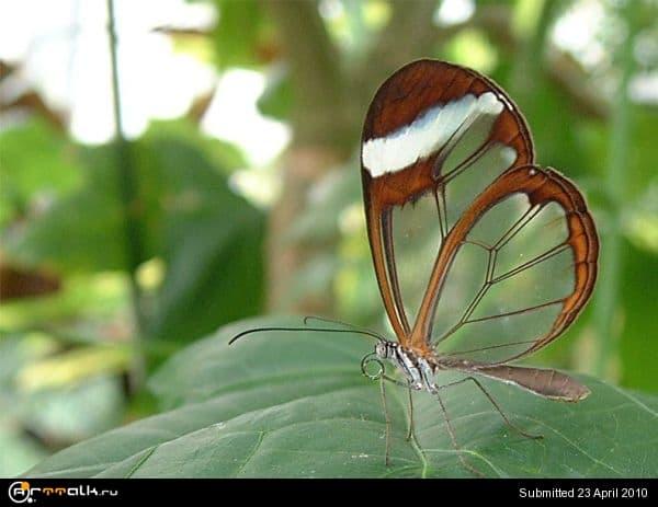 butterfly-002.jpg.46864093d08086c6ba2dddf201a0900a.jpg