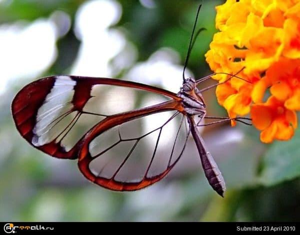 butterfly-003.jpg.24ed93057930e04b965227b66cea5bca.jpg