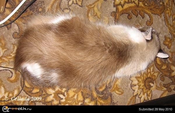 img-4105-my-cat-72.jpg.942097fb6c5281b44e294c6021ae5f3c.jpg