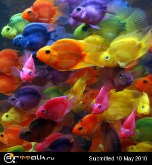 red_parrot_2.jpg.3eb8e37e686ba1604f03c4ba66efa5b3.jpg