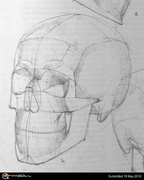 skull.jpg.fca1a9803c45a3e11cd485c280820030.jpg