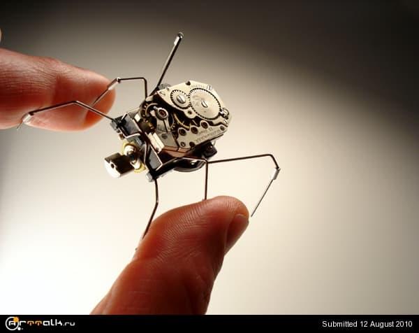 1268427477_insect15.jpg.5e05e2d900c17318159171192913a4f9.jpg