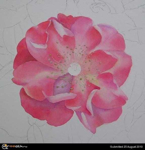 rose11.jpg.af9c92e94eb5c604e5680a73d0e3f6ae.jpg