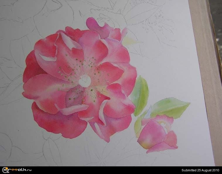 rose13.jpg.9422f1c93634c9dcbcddb9ebcc777d72.jpg