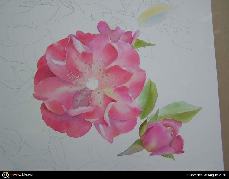 rose14.jpg.05e1319e70547a56e6353220590b60a8.jpg