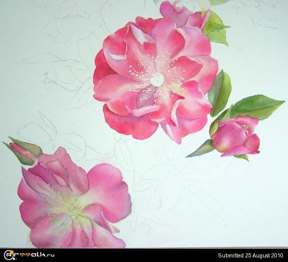 rose15.jpg.87347f37152b968d37b1a53475410a58.jpg