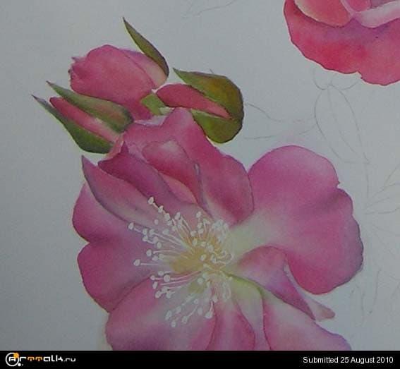 rose18.jpg.87c6f5119815d0290451c20631a76aac.jpg