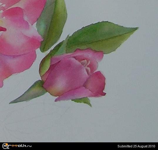 rose20.jpg.0942e9f4da704b60759367f7fc8d478d.jpg
