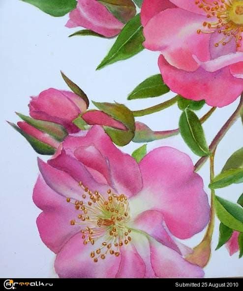 rose24.jpg.8779f3a62905bc8374d2b91fb97f8bec.jpg