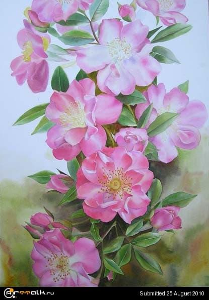 rose27.jpg.18c91965091a0347b163828b9c2ff06e.jpg