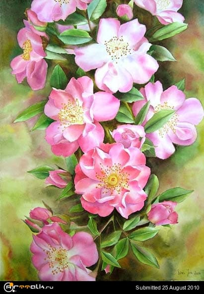 rose28.jpg.29c7fd25172616e3f5c638e53205f128.jpg