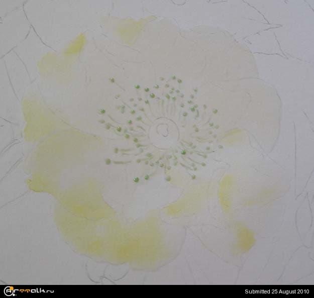 rose8.jpg.3ad59c977dee76dbf16f3a03933202ae.jpg