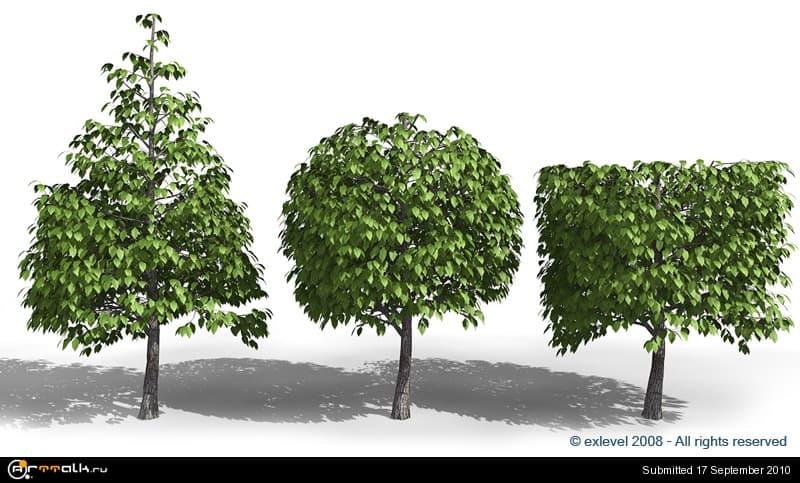 Tree_04.jpg.47c2e1271d49afba7dbe3451ecfc85bd.jpg