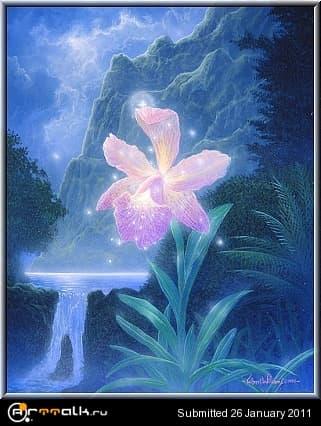 40181946_Flowering1990.jpg.8a272facf43b6a306347283c1b4a328a.jpg