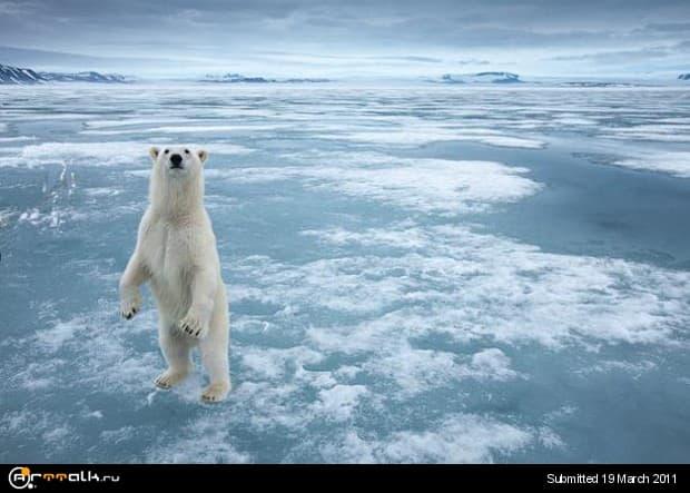 ice2.jpg.8c61b1164189d678d39ae414cb73bbcc.jpg