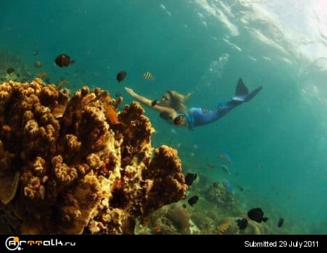 10.Hannah-Fraser_Cebu-Coral-Swim-2006.jpg.01a967ab01ccad60df5798d1c290636e.jpg