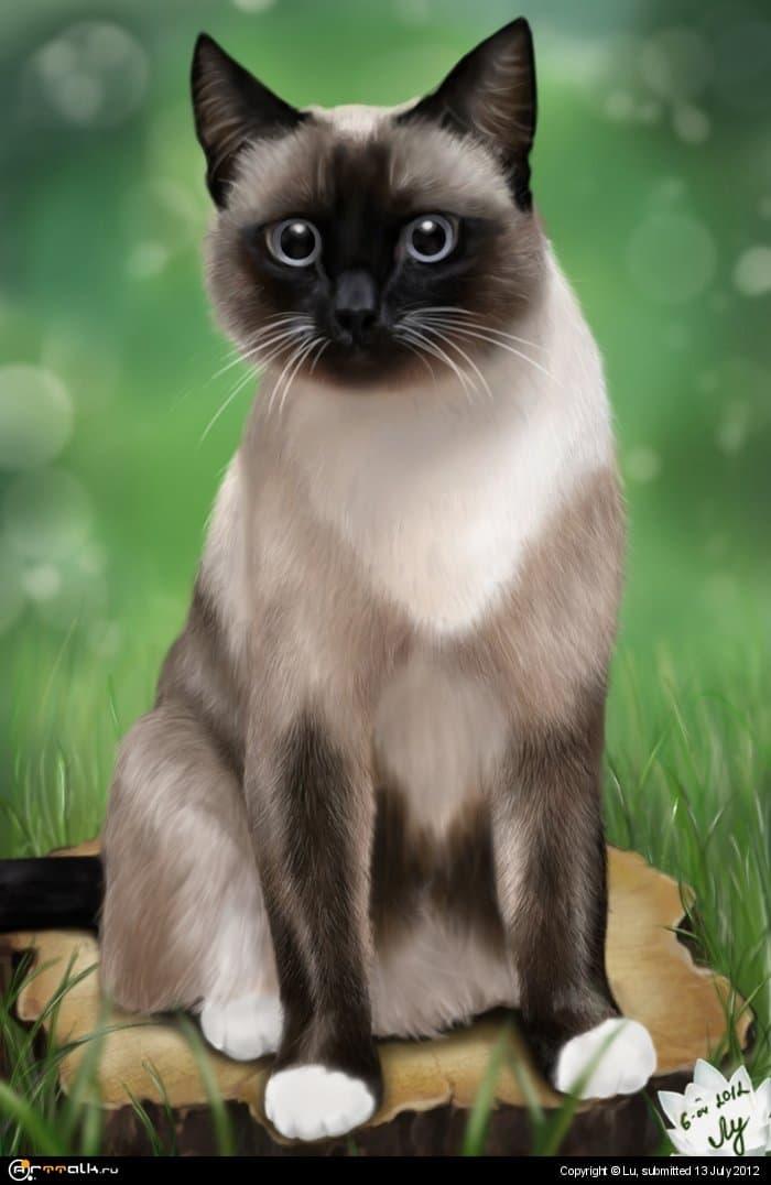 Мой котик:)