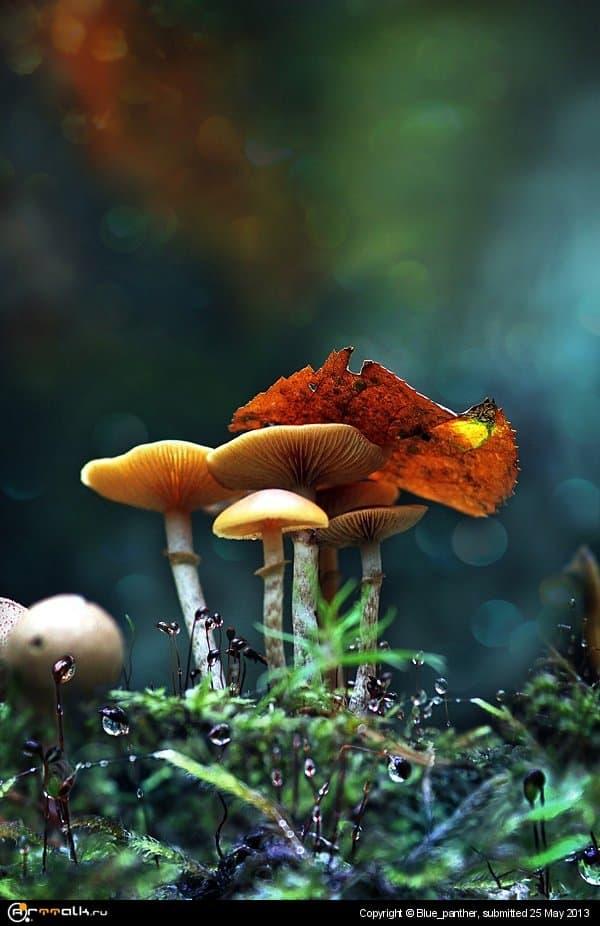 Радужные грибочки )))