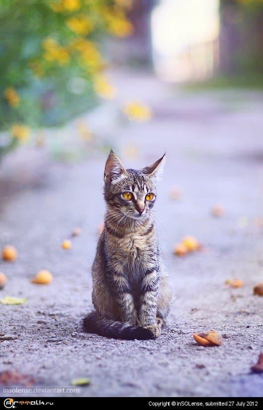 Кот и абрикосы