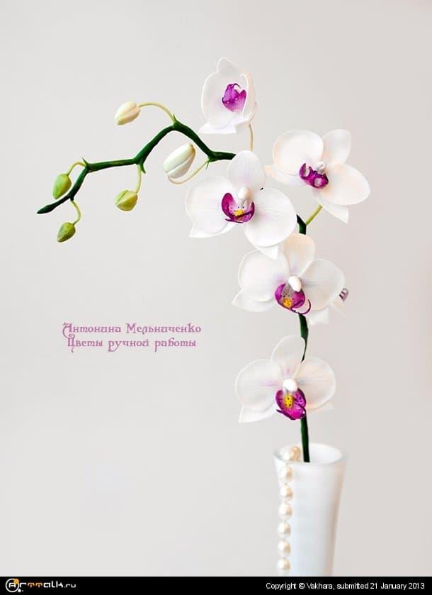 Орхидея фпленопсис