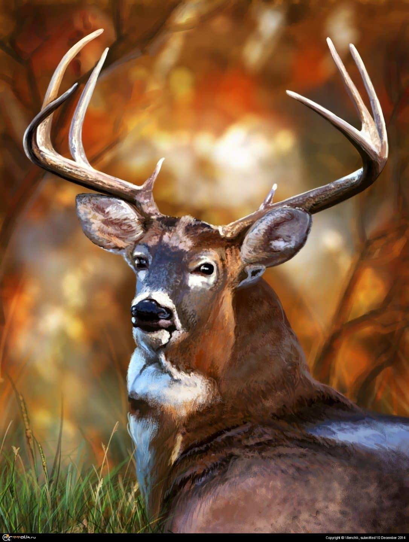 Deer Look