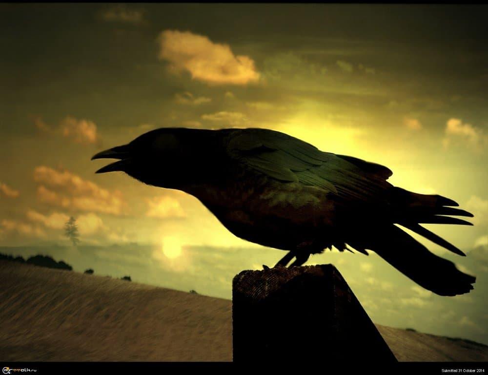 1440-Sunset-and-Raven.thumb.jpg.4980f13cf4ca9b36351f5f2a97667279.jpg