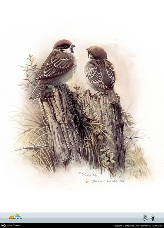 5a982110798a5_birds(26).thumb.jpg.746c1b733c9dc0ce429f0520aad20a7f.jpg