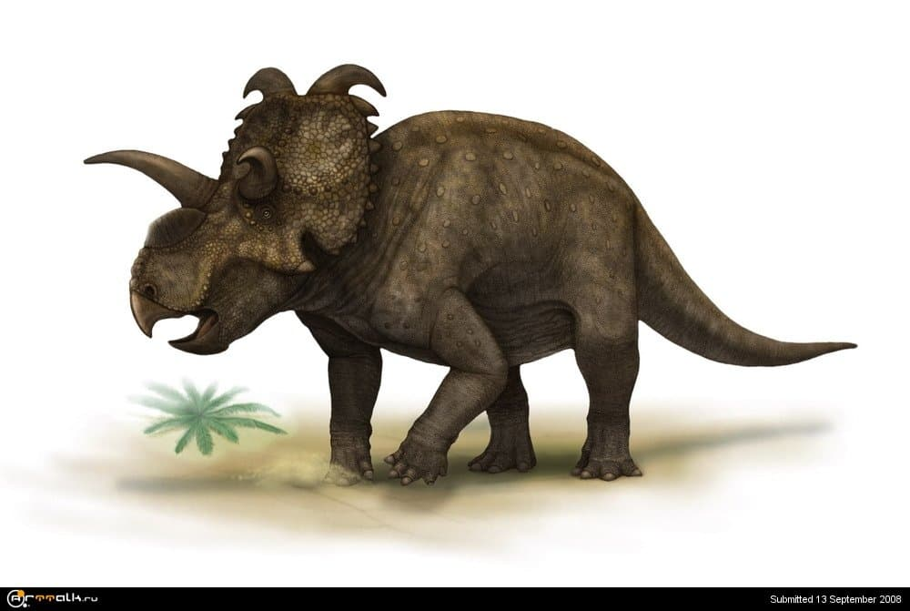Albertaceratops_nesmoi.thumb.jpg.7a3581da0e8bc5d7110968247877ae22.jpg