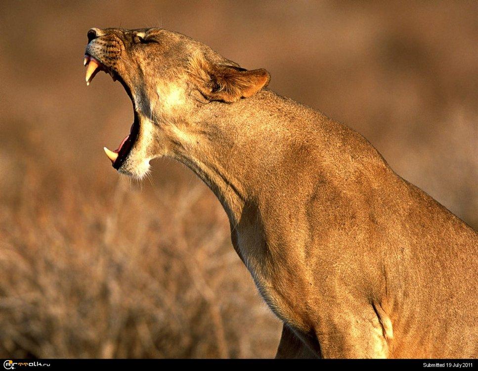 Animals_Beasts__001831_1.thumb.jpg.fe14fa9da684cab3f5eef806d3a92ba0.jpg