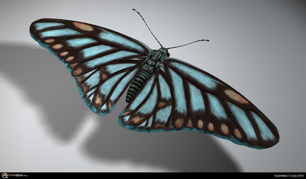 Butterfly_MC_2.thumb.jpg.0d9148d988cc82bc19f42bba39af2848.jpg