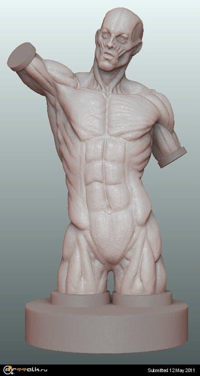 anatomia.thumb.jpg.de4378b4fc1ad3a5f6d78590bdfcf80c.jpg